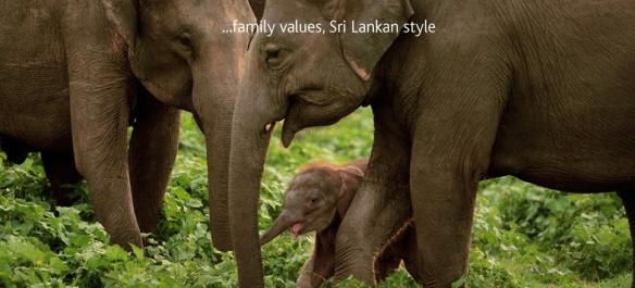 Scintilating Srilanka !!!